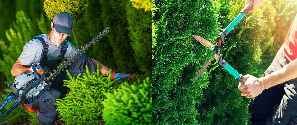 Entretien des parcs et jardin, création de jardin, entretien des espaces verts