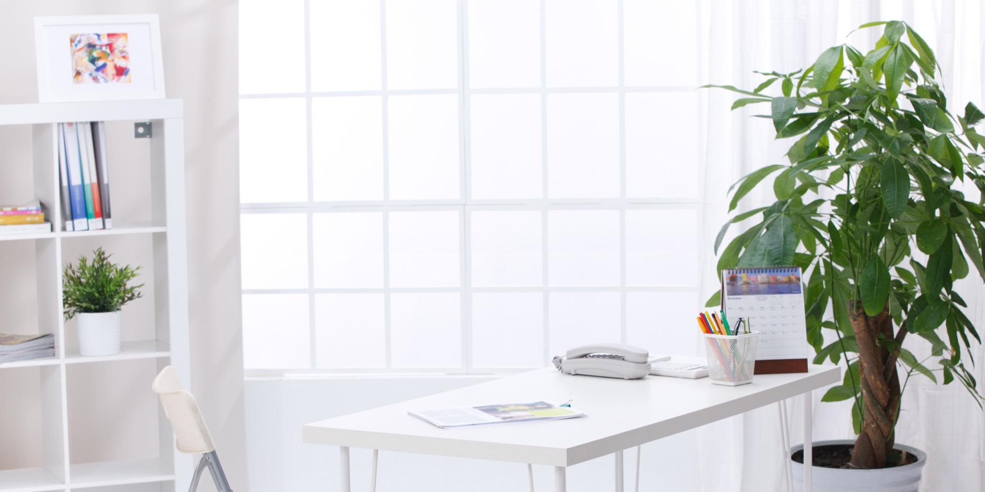 Les effets des plantes vertes au travail