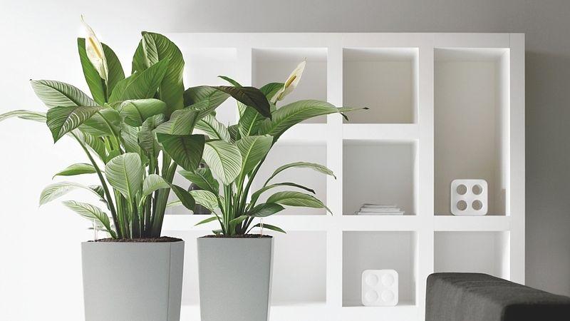 location de plantes