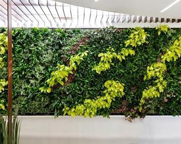 Vegetal green wall