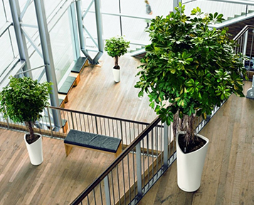 Rental and maintenance of plants