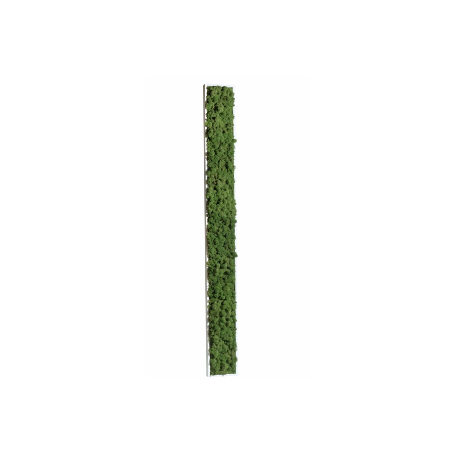 Tableau de Lichen Stabilisé Vert Nature Maxi-Slim