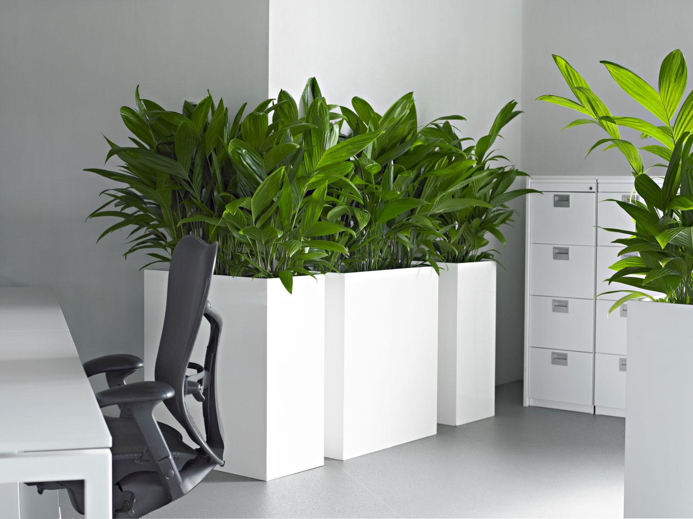 location de plantes vertes paris louer plante bureaux artificielle. Black Bedroom Furniture Sets. Home Design Ideas