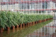 l'Hydroculture est parfaitement adaptée aux espaces de travail, aux hôpitaux et aux lieux clos