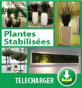 Brochure plantes stabilisées