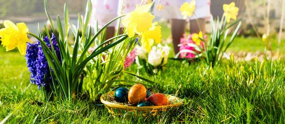 Chasse aux œufs pour les enfants