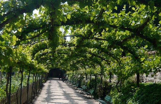 Le jardin médiéval de Cluny