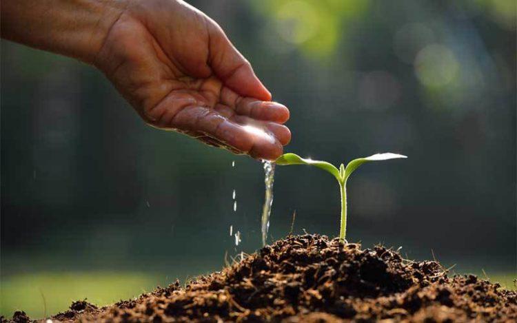 Encore 100 millions d'arbres à planter !