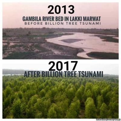 déjà 1 milliard d'arbres plantés