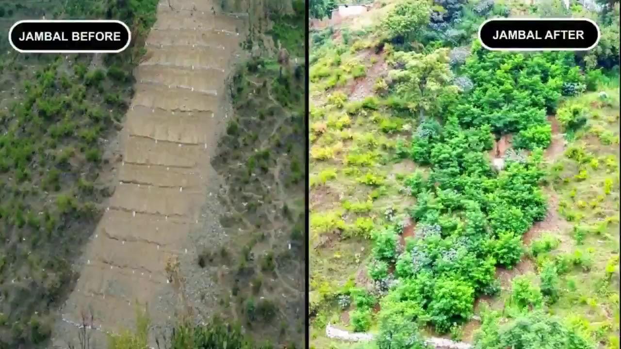 Le tsunami d'un milliard d'arbres