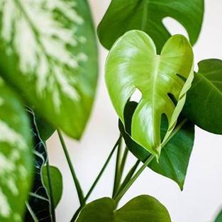Choisissez parmi notre catalogue de plantes et dépolluez