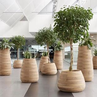 Forêt de plantes disposées sous contrat de location et entretien
