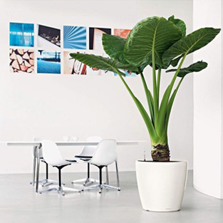 Plantes vertes tropicales sous contrat d'entretien
