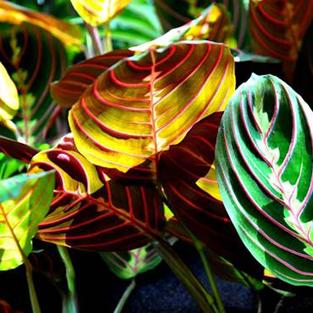 Un service garanti avec la location de Plantes dépolluantes