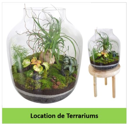 location de terrariums gestivert