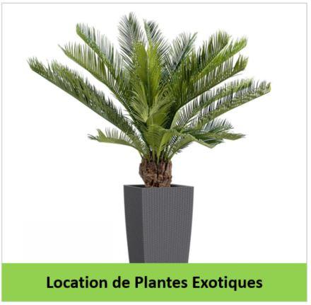 location de plantes exotiques gestivert