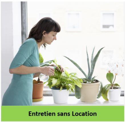 Entretien de plantes sans location, gestivert