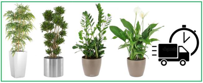 location de plantes gestivert