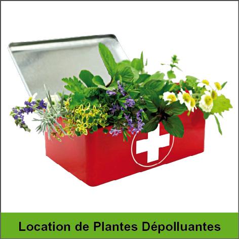 location plantes dépolluantes