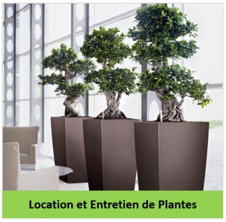 location et entretien de plantes