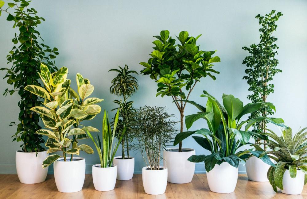 location de plantes dépolluantes